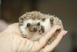 7. Mezinárodní výstava exotických ježků
